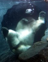 Polar_Bear_Fun by BrknRib