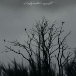 SEVEN CROWS by CountessBloody