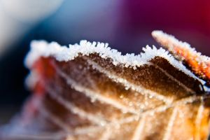Frosted. by JadeGreenbrooke