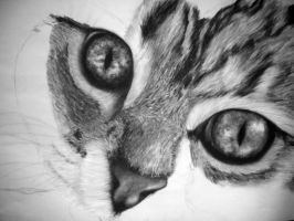 WIP Charcoal Cat 3 by emollience