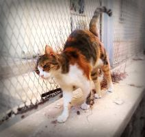 Calico cat by BL00DYSunflowers