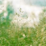green grass by Megson