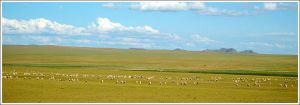 Idyll, Lambs on pasture by Danyana
