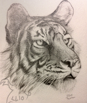 Tiger portrait ~FOR SALE!~ by Sir-Hootalot