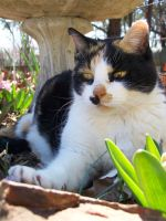 Calico In the Flowers02 by effing-stock