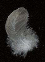feather 8 by tash11-stock