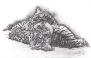 Tiger Brothers - Drawing 01 by KurtBrugel