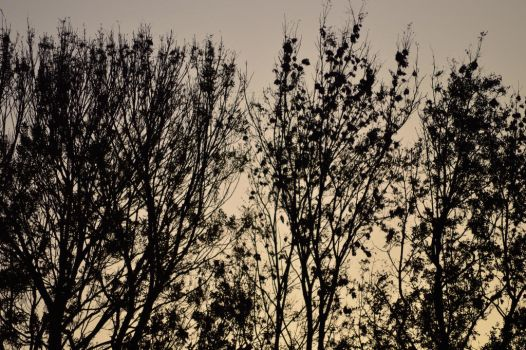 Skyline Through The Trees by JoeDHalford