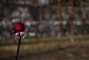Lonely red by Omnia89
