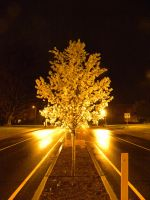 Traffic island tree by Cassini90125