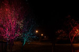 Colorful Trees by Moones95