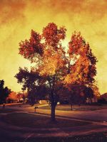 Southern Fall by TrueElements