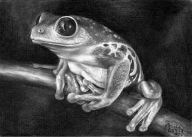 poisonous frog. by marika-k