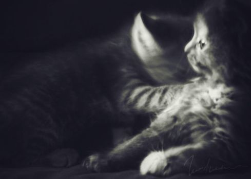 Kitties in black and white by Elenihrivesse