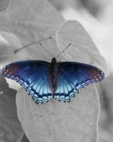 Blue Butterfly by MandyisDandy247