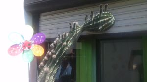 big cactus by MrsCromwell