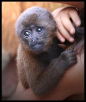 lil Monkey by Kaydolf