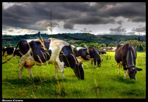Some Cows by Megglles