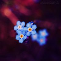 reflection. by magnesina