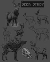 Deer Studies by Eliket
