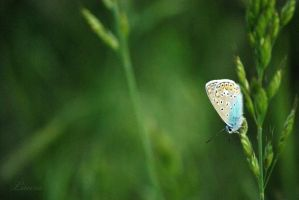 Step one to summer - butterfly by Lk-Photography