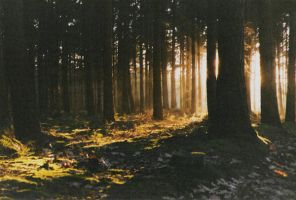 Pagan Forest - Photography by ToosT