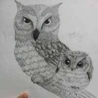 Owls (unfinished) by dailybunny