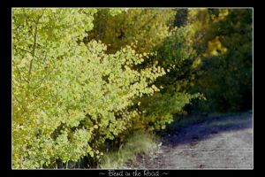 Fall Colors . Bend in the Road by idlewild202