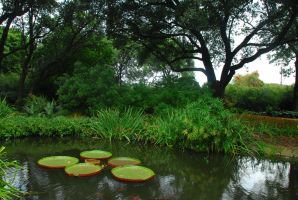 Lilly Pads in Pond by CatherineCross
