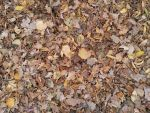 Autumn Leafs 02 by Fea-Fanuilos-Stock