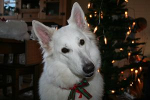 Xmas dog by Crusnick