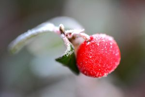 frost 2 - berry by kaykay1616