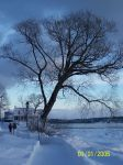 Tree during winter by Mudkipy