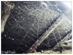 Cobweb - nothing there by InDeathsEmbrace