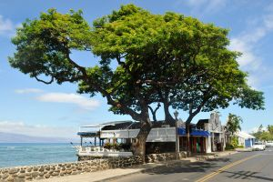 Lahaina beach restaurant by wildplaces