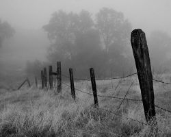 Foggy Fence Line by Nikonthog