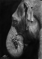Elephant by iSaBeL-MR