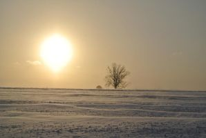 Sunrise over a snow covered field by hungduke