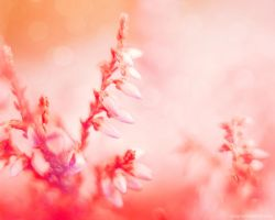floral dreaming. by magnesina