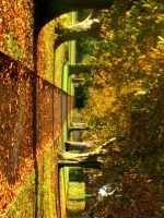 Autumn path stock by 231205-stock
