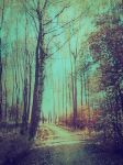 forest 27 by Amalus