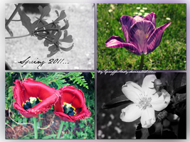 Flowers - Spring 2011 by GiraffeAndy