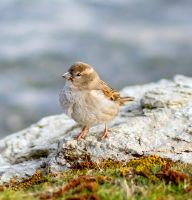 Little Sparrow by ARC-Photographic