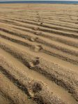 Footprints by Trablete
