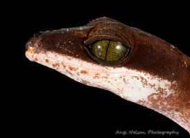Cat gecko head shot by AngiWallace