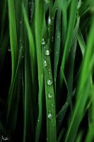 water.Grass by Ave117