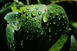 Water Drops by TietzeDesign