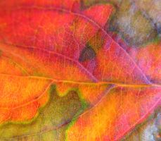 autumn leaf texture by thiselectricheart