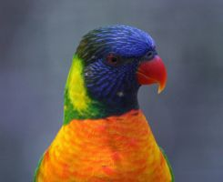 parrot by mf122792