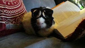 Study Pig by Eviecats